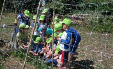 Via alle iscrizioni per AgriCamp: torna il centro estivo alla Fattoria Riparo